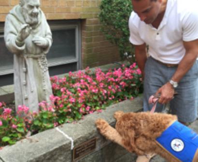Lulu The Funeral Dog