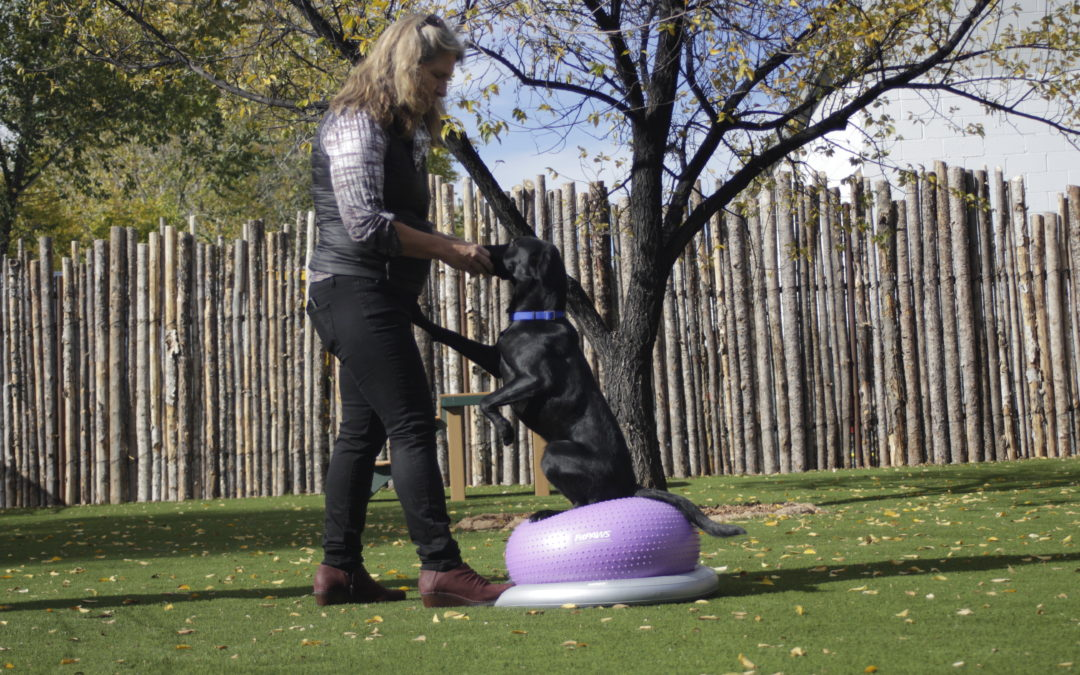 FitPAWS For Working Dog Training and Fun