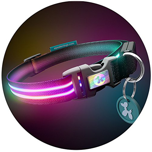 Squeaker LED Collar